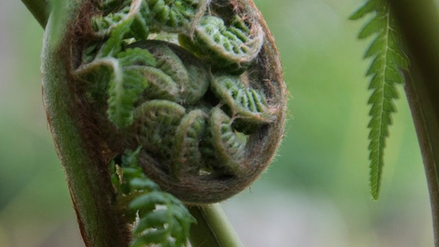 Coiled up fern spine