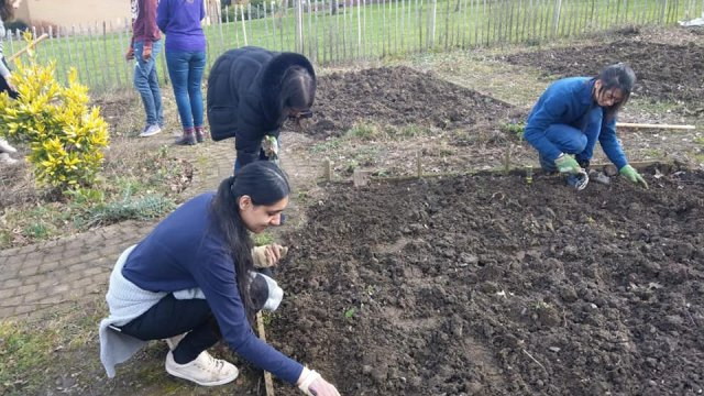 Students doing gardening in the campus community garden