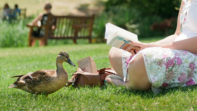 Student reading a book with a duck