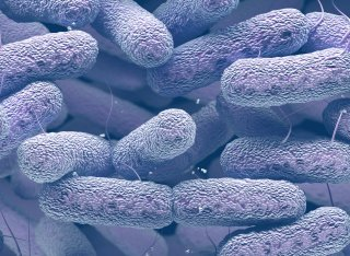 Drug-producing bacteria editorial image