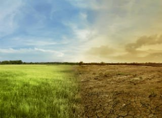 A healthy green field turns into a cracked hot desert in the heat
