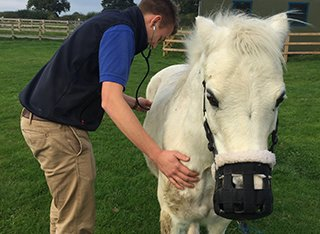A vet student is in a field examining a white horse