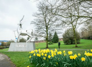 Daffodils in front of the University of Surrey Stag Sculpture
