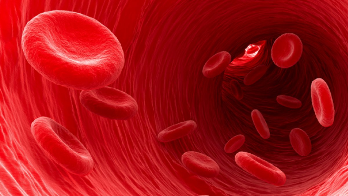 Close up of red blood cells moving through an artery