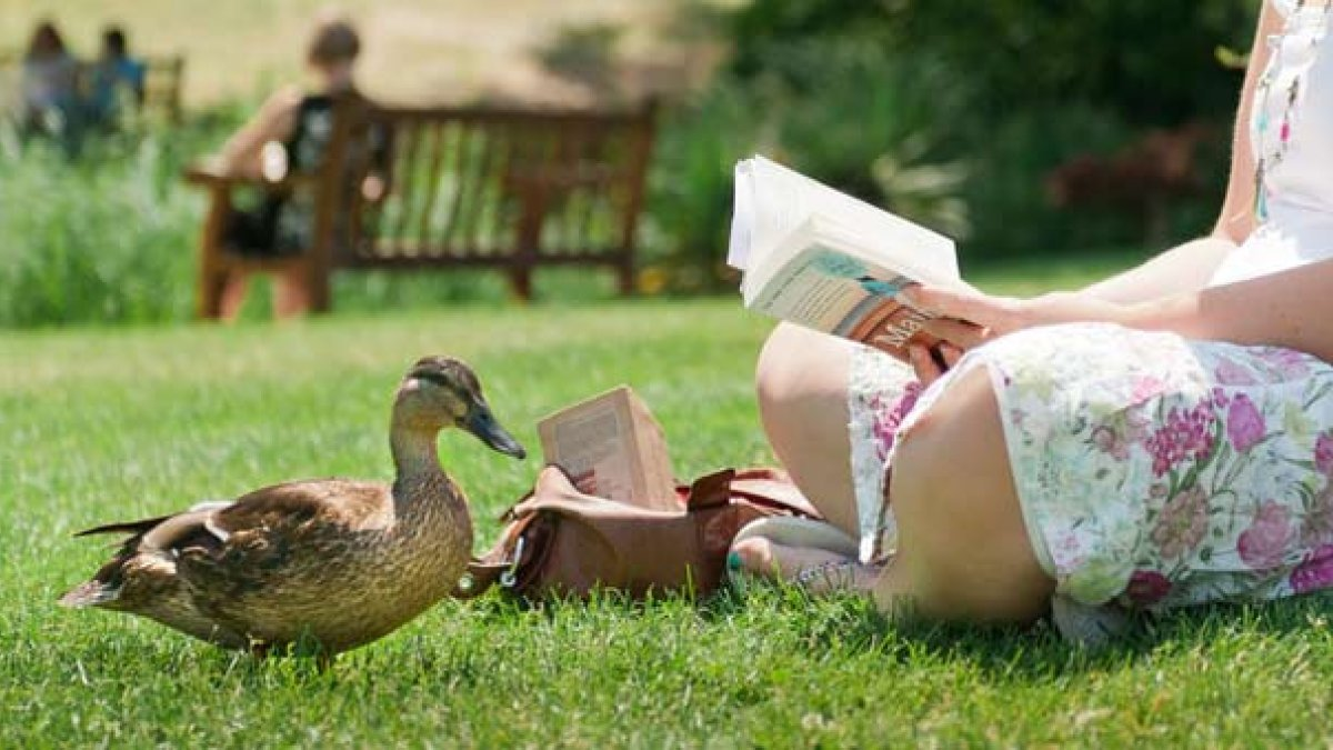 Student reading by the lake with a duck nearby