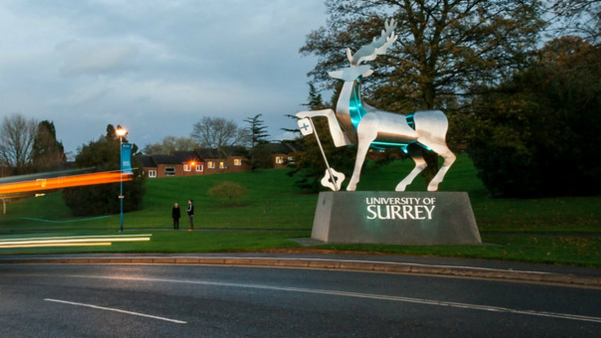 Surrey stag in dusk