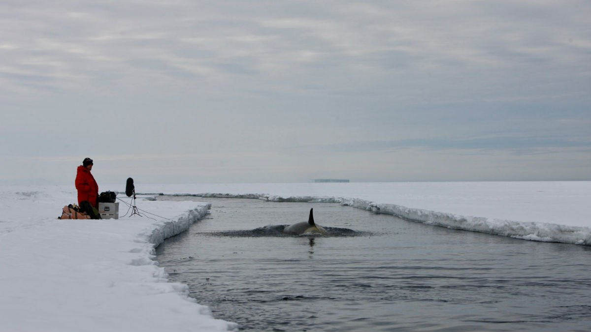Chris Watson recording orcas in Antarctica